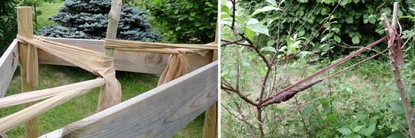 On peut utiliser ses bas collants filés pour attacher de jeunes arbres à un tuteur