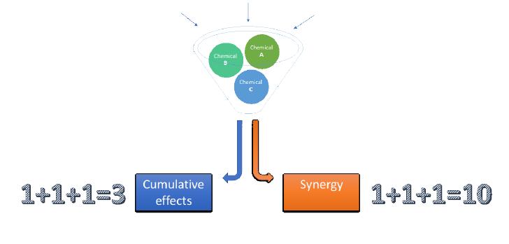 Addition et synergie : deux modes d'action des perturbateurs endocriniens