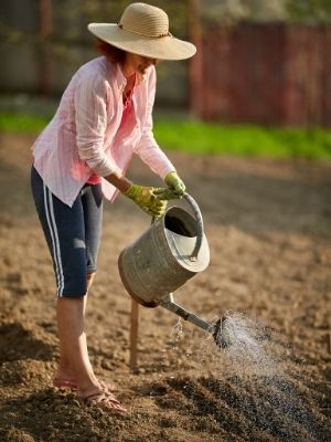 Gérer les arrosages du potager