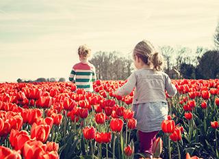 Cueillir ses fleurs directecemtn au champ