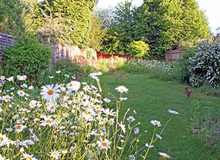 Jardin au naturel, fleuri.