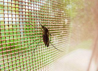 Une moustiquaire : la meilleure arme contre les moustiques