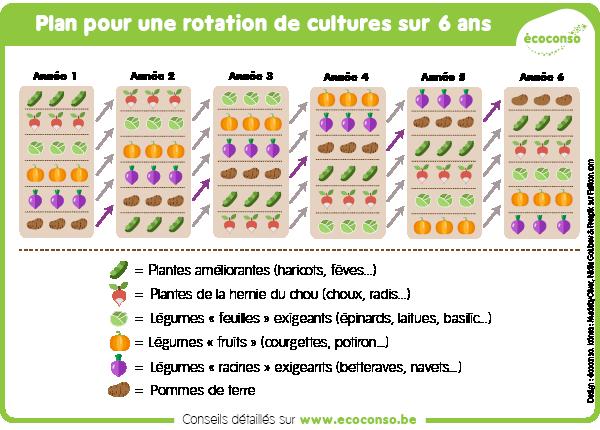 Exemple de plan de rotation de cultures sur 6 ans