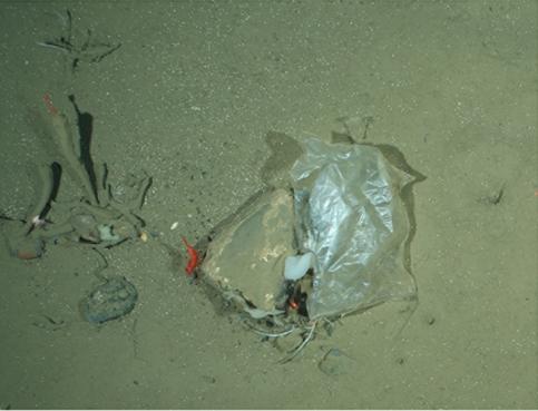 Sac plastique trouvé à 2500 m de profondeur, dans l'Arctique.