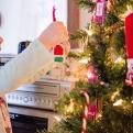 Quel sapin écologique choisir pour Noël ?