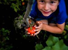 Wallonie: les pesticides au glyphosate interdits