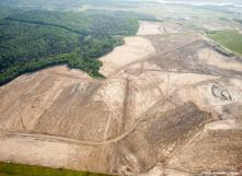 Déforestation (WWF)