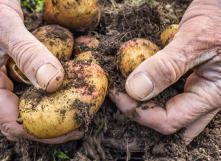 Chaire Franqui au titre belge 2016-2017 : L'agroécologie