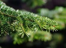 Après Noël, le sapin est collecté par l'intercommunale.
