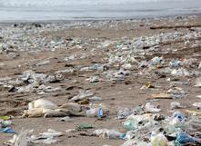 Une bactérie pour dévorer tout ce plastique ?