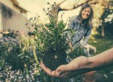 Astuces pour un beau jardin et un potager productif, sans pesticide