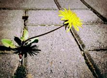 Comment lutter contre les mauvaises herbes ?