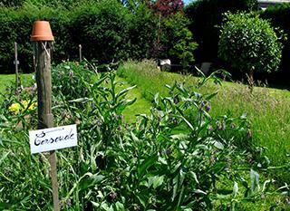 Garder 1m2 de jardin sauvage
