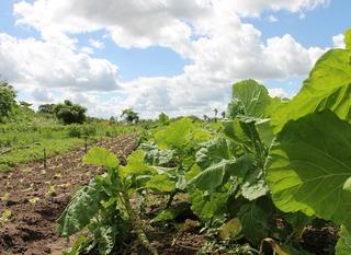 L'agrobiologie, c'est l'avenir pour l'ONU