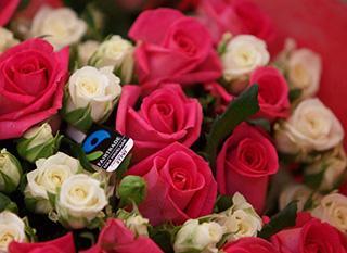 Des fleurs équitables. Photo : Fairtrade / Max Havelaar France