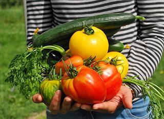 Rotation des cultures : comment alterner les légumes au potager ?