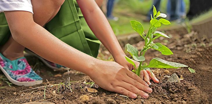 Préparer un jardin écologique au printemps